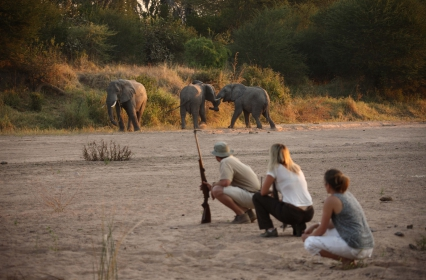 Get upclose and personal with game walks at Ruaha